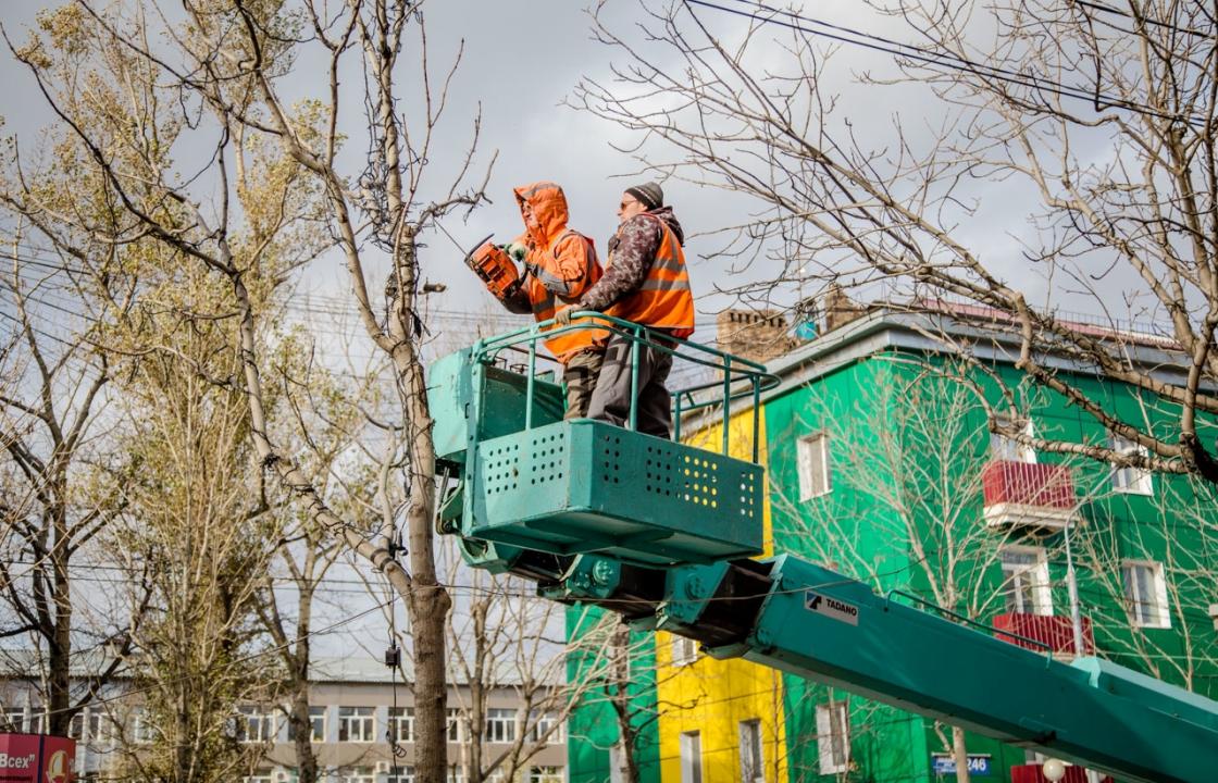 Власти Симферополя хотят заработать на обрезке деревьев