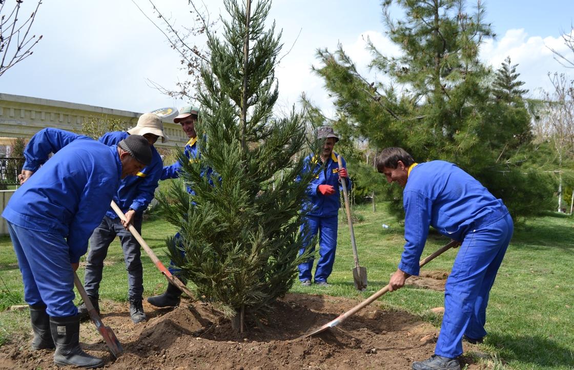 Система «Инцидент менеджмент» рассказала о будущем деревьев на «тропе здоровья» в Краснодаре