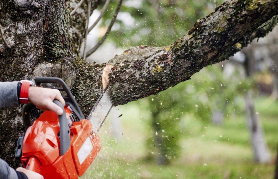 «Мы до сих пор не знаем даже, сколько деревьев в Краснодаре»