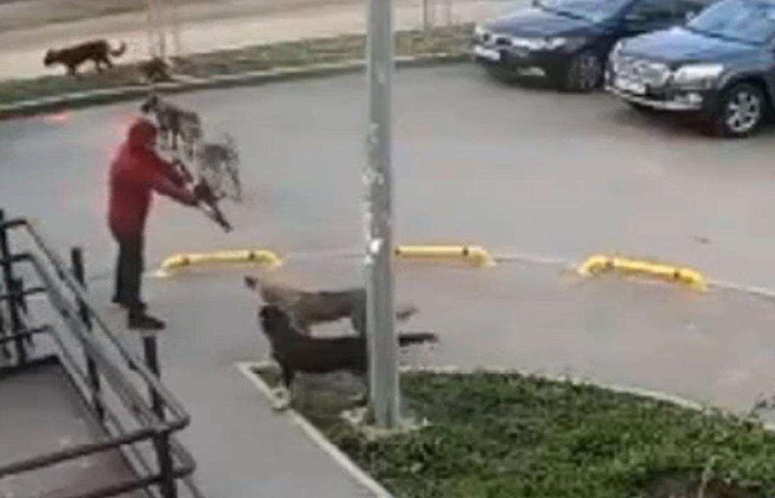 Полиция задержала ростовчанина, в упор стрелявшего в собак на улице