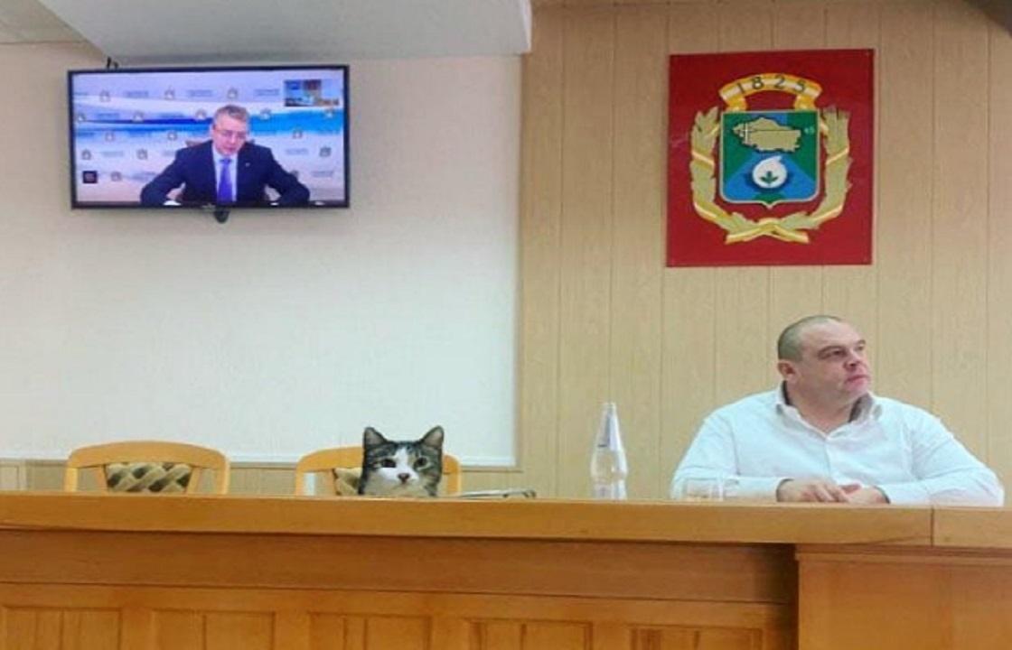 Депутатом Невинномысска может стать кот Кипиш