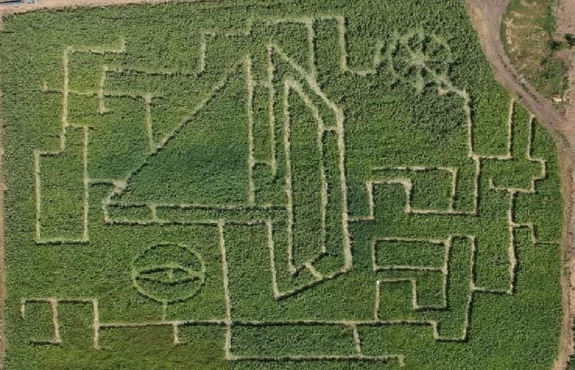 Кукурузный лабиринт для туристов открыли в Таганроге