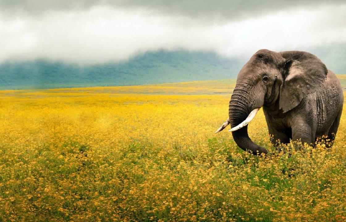 «Слоновий курорт» открылся в Сочи